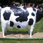 Tort krowa (źródło: tlc.howstuffworks.com)