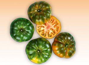 Pomidory odmiany RAF (źródło: biedronka.pl)