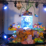 Tort podwodny świat (źródło: tlc)